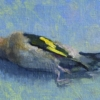 Dead Goldfinch study