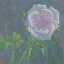 White rose tempera